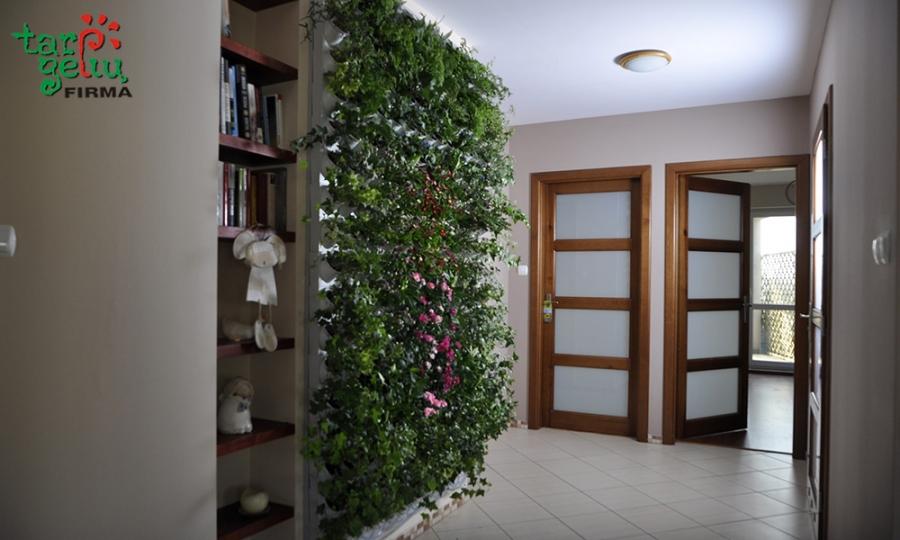 Augalų sienelės gražu ir praktiška