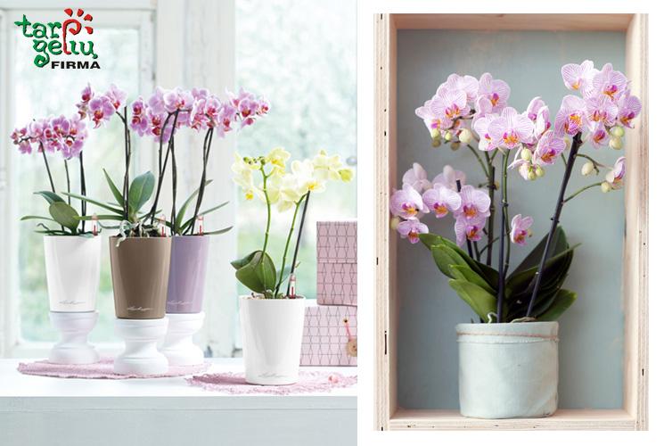 orchideju-kompozicijos1