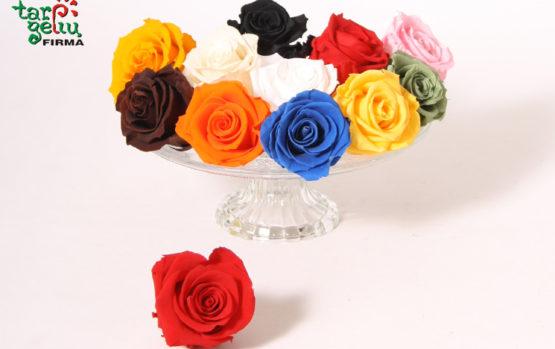 Ilgai žydinčios rožės!