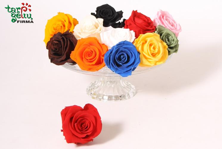 Stabilizuotos, miegančios rožės