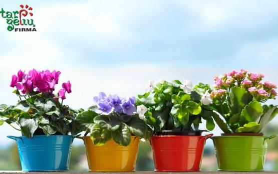 Jums padovanojo kambarinį ar lauko augalą?