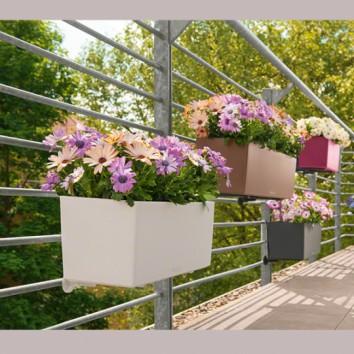 Geriausi indai balkono sodinukams