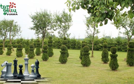 """""""Tarp gėlių"""": nauji vėjai jūsų sode – žaliųjų šachmatų lenta"""