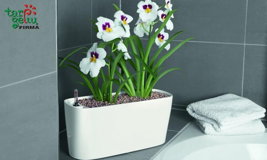 Į ką sodinti orchidėjas