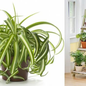 Kambariniai augalai sveikai aplinkai