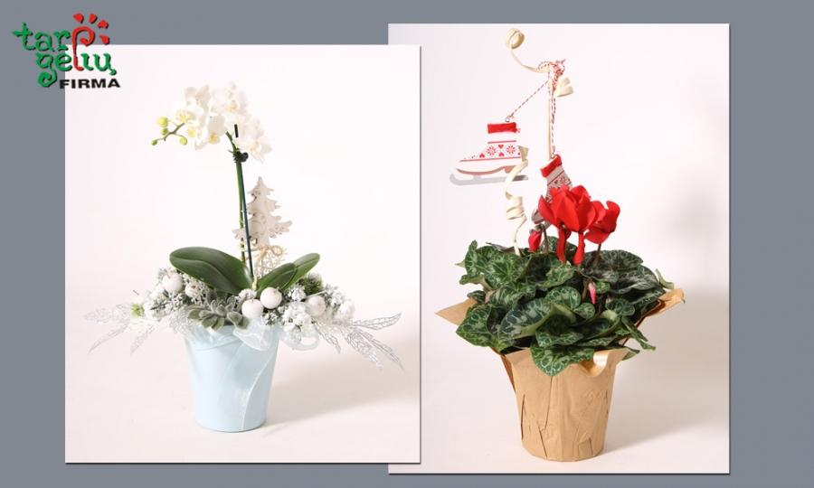 Dar vienas idėja dovanai – žiemiškos gėlės