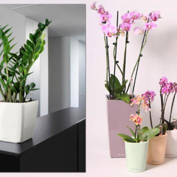 Dovanų idėja – augalas vazone