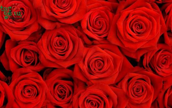 Floristai Meilės šventės neįsivaizduoja be rožių