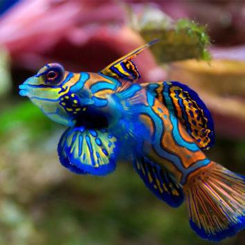 Dovanos pagal Zodiako ženklą: Žuvys