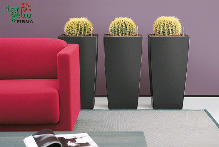 Kaktusų priežiūra pagal saloną TARP GĖLIŲ