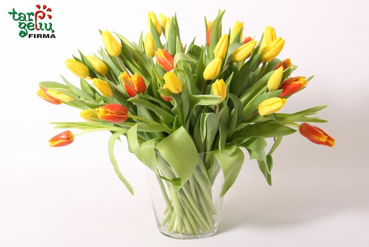 Tulpės – pavasario gėlės