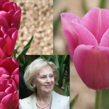 """""""Tarp gėlių"""": apie Moters dieną ir garsios ponios tulpes"""