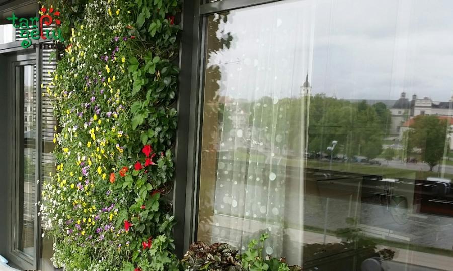 """""""Tarp gėlių"""": kurkite kabančius gėlynus, žemuogių pieveles..."""