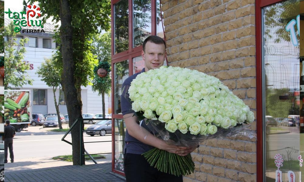 200 baltų rožių puokštė