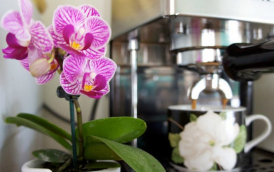 Ekologiškas maistas kambariniams augalams
