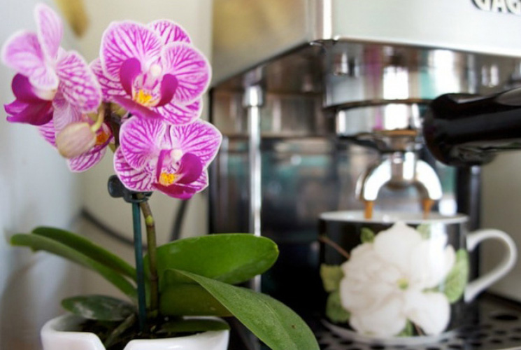 EKOLOGIŠKAS MAISTAS gėlėms