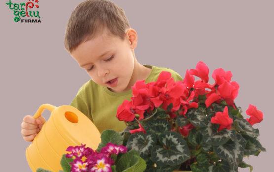 Augalai vaiko kambariui
