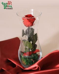 Skinsiu raudoną rožę.