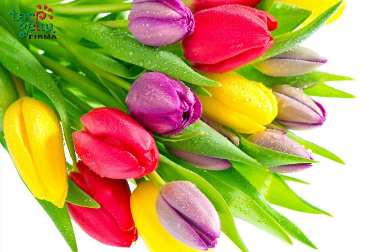 tulpiu-spalvos_simbolizuoja