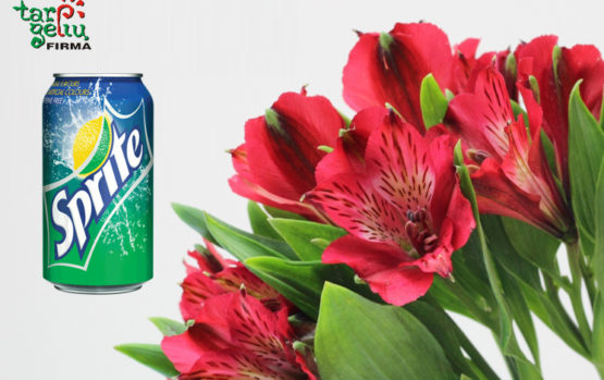 """Kas bendro tarp """"Sprite"""" ir skintų gėlių?"""