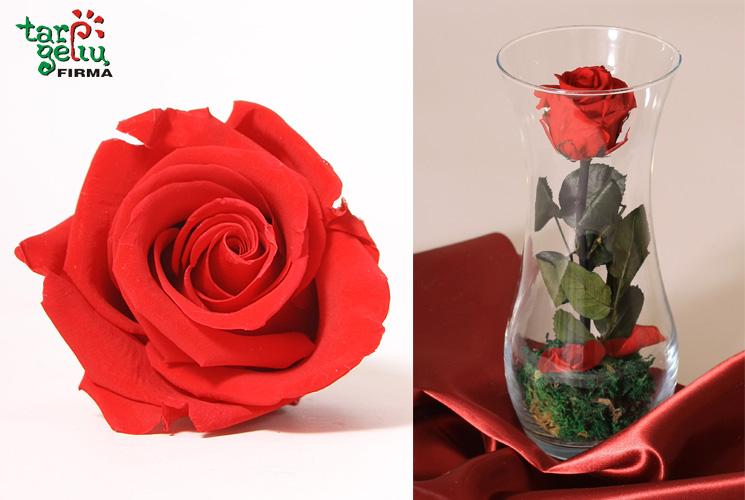 Stabilizuotos rožės. Profesionalų patarimai ir pasiūlymai