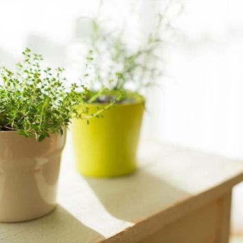 Kambariniai augalai jau pajuto pietietišką kaitrą