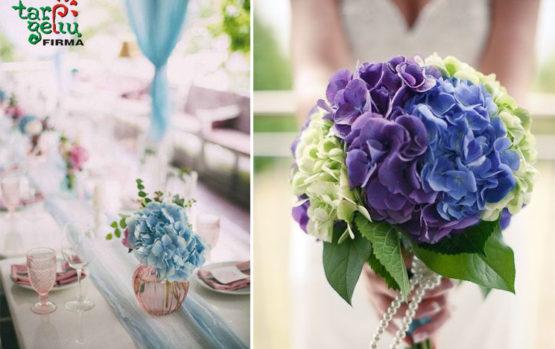 Hortenzijos jūsų svajonių vestuvėms