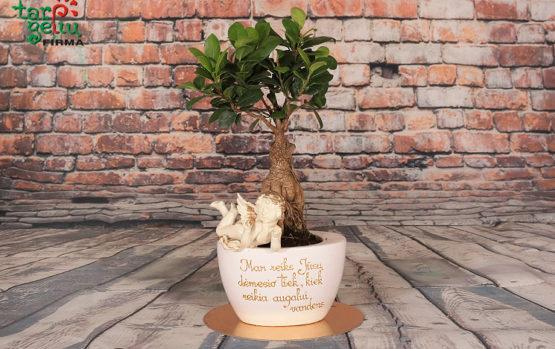 Esė apie poetišką augalo ir vazono duetą