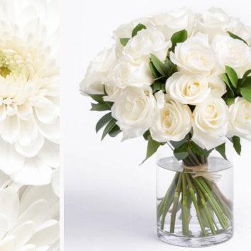 Baltos gėlės spinduliuoja šviesą ir ramybę