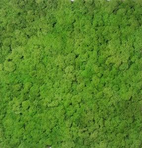 koralines-samanos