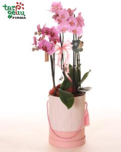 Orchidėja dėžutėje