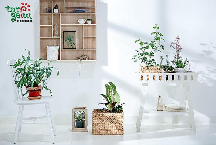 Augalai pagal feng shui